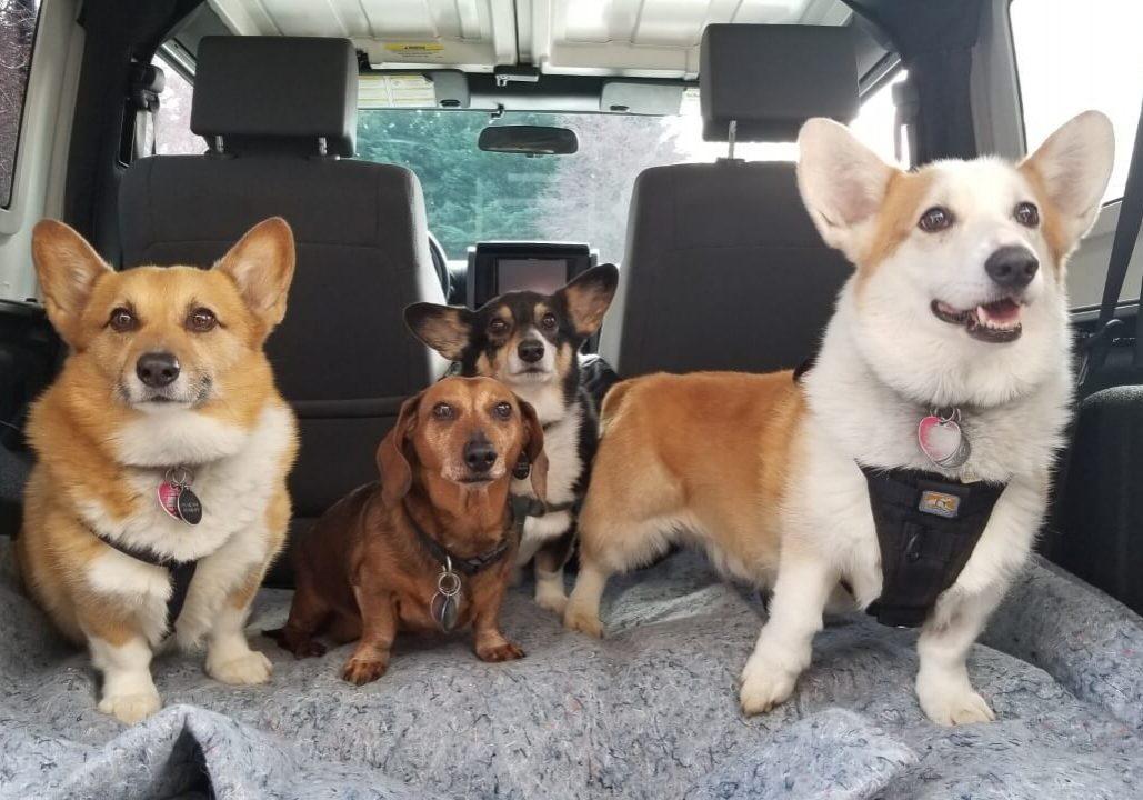 Doggy Road Trip